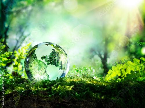 Kryształowa kula na mchu w lesie - koncepcja środowiska