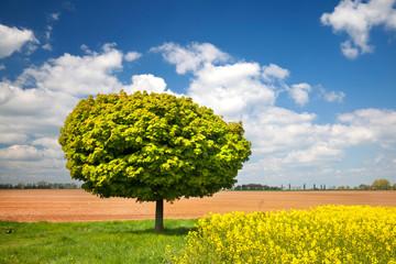 Wiesen, Felder und ein Baum