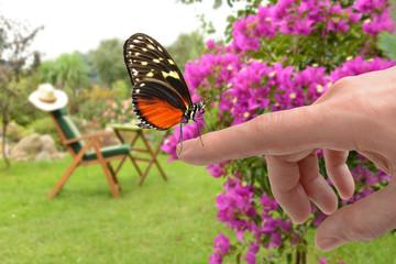 Schmetterling 146