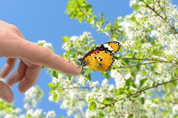 Schmetterling 163