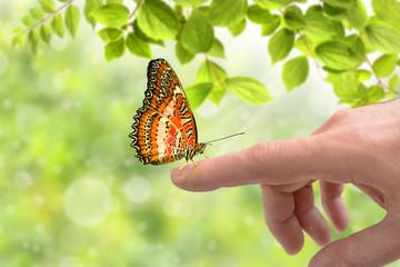 Schmetterling 169