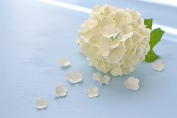 ビバーナム・スノーボールの花びら