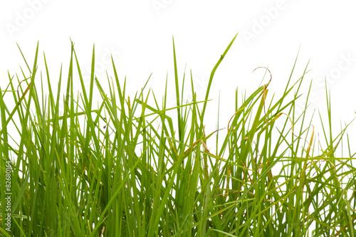 herbes sur fond blanc © Unclesam