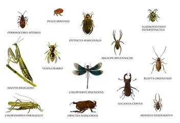 Insekten in Europa