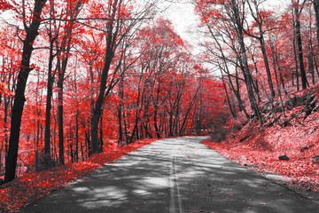 Highway Through Red Forest in Black and White Landscape