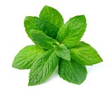 Mint leaf - 82689708
