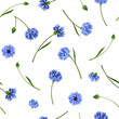 Seamless pattern with blue cornflowers. Vector illustration.