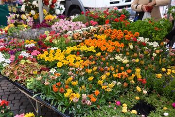 bancarella fiori mercato