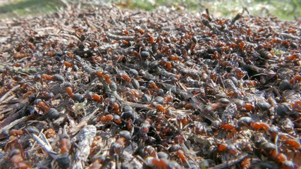 Anthill with moving ants