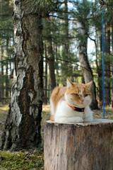 kot na pieńku w lesie