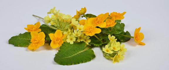 Frühlingsblumen, Himmelschlüssel, sumpfdotterblume