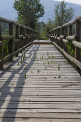 wooden bridge on the lake