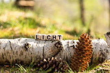 Würfel auf dem Waldboden - Licht