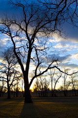 Winter Bare Tree at Sunset