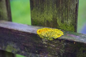 moss on a hedge
