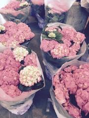 Full Bloom Spring Hydrangeas