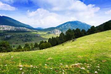 mountain landscape with meadow