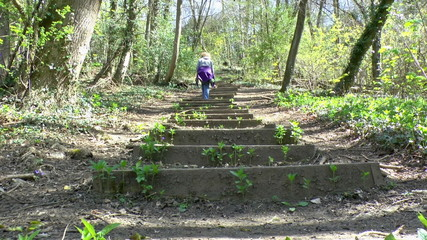 Woman walking up a flight of steps in a forest in the Springtime