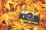 Fototapeta Vintage Photo Camera in Dry Maple Leaves