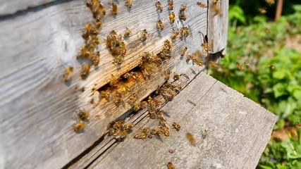 Bees + Audio