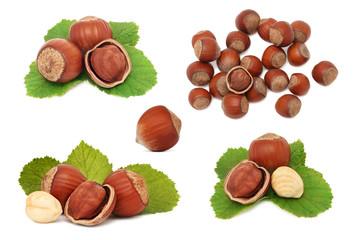 Set ripe hazelnuts (isolated)