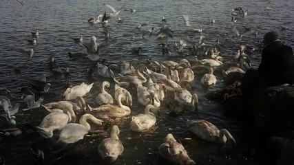 Feeding of a lot of birds