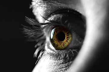 Nahaufnahme Grünes Auge