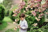 a little boy, and cherry blossoms