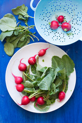 Radish with Leaves on White Plate