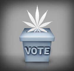 Marijuana Election Issue