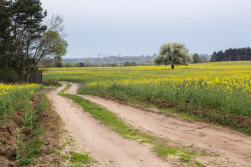 road in summer field with  green grass and yellow flowers