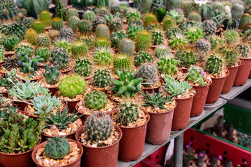 various of small plant and cactus