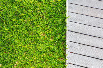 Fresh spring green grass with wood floor