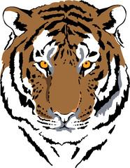 tiger head in color interpretation 6