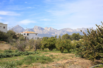 Orange groves and mountains Spain