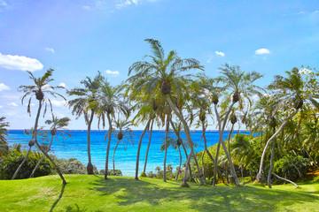 南国リゾートのヤシの木林と青空と海