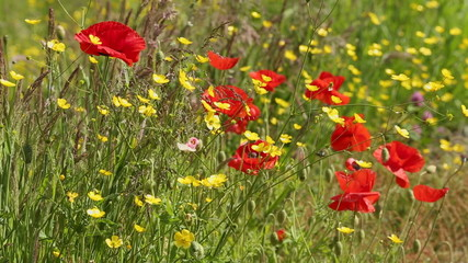 Wildflowers in a Strong Breeze