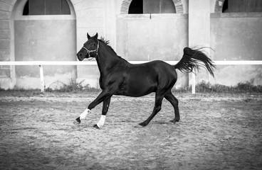 Horse in gallop.