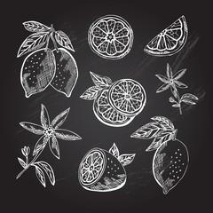 hand drawn lemon fruits