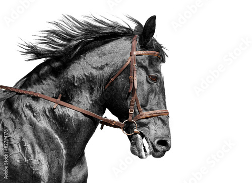 Horse portrait in black and white in the brown bridle - 82794175