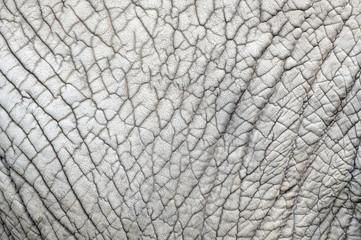 Elephant skin nature pattern