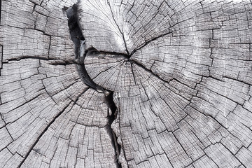 Close up cross section of tree trunk