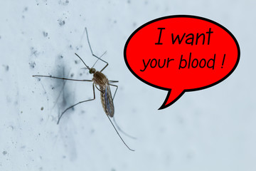 """Mosquito """"I want your blood"""""""