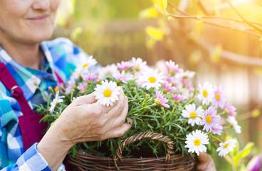 Beautiful senior woman planting flowers in her garden