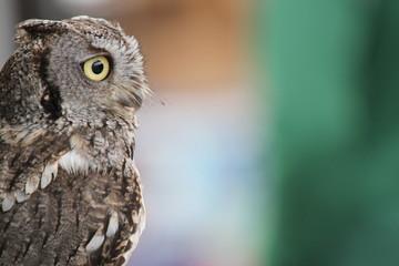 Owl in Alaska