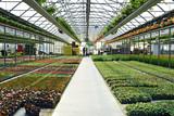 interno vivaio fiori e piante coltura - Fine Art prints