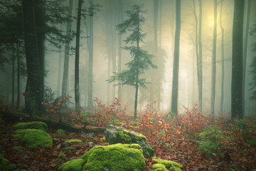 Dreamy light in foggy forest with sun