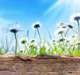 Gänseblümchen, blauer Himmel, Sonne, Holzbrett