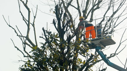 Gardener on a Crane Cutting Tree Branches