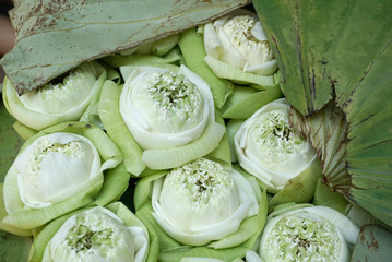 Beautiful green lotus flowers